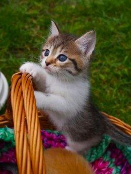 Кошки - Красивая девочка ищет дом , 0