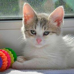 Кошки - Крошка с ладошку мальчик Пончик 3 мес ищут дом, 0