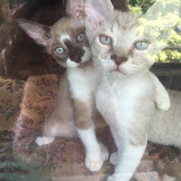 Кошки - Котята сфинкс, 0