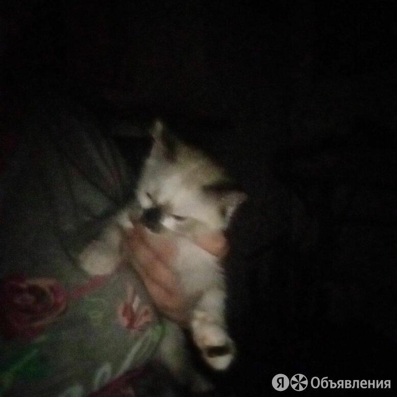 Кошечку в добрые руки по цене 1₽ - Кошки, фото 0