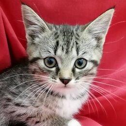 Кошки - Котенок-домовенок Кузя в добрые руки , 0