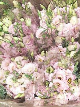 Цветы, букеты, композиции - Цветы опт, 0