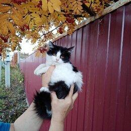 Кошки - Котенок девочка 3 мес, 0