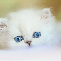 Кошки - Котики милые пушистые, 0