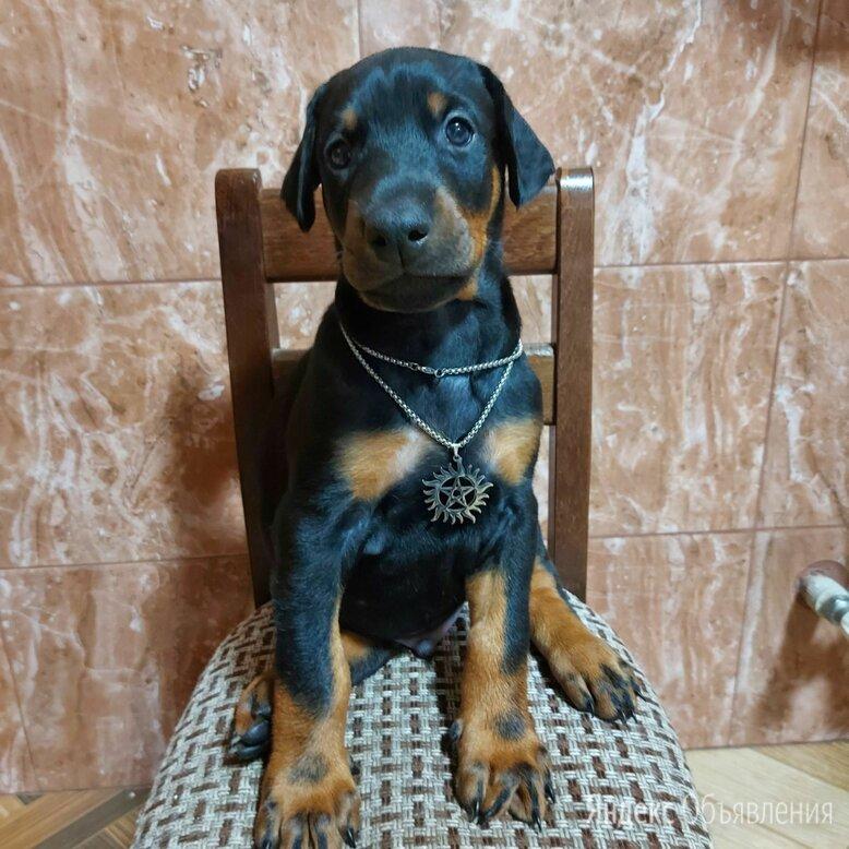 Доберман щенок по цене 18000₽ - Собаки, фото 0