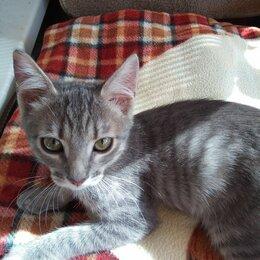 Кошки - Котёнок в добрые руки, 0