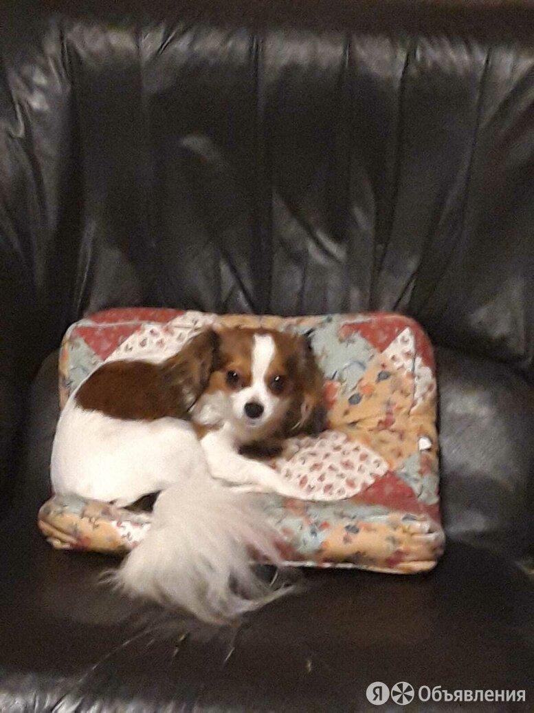 Пропала собака по цене 15000₽ - Животные, фото 0