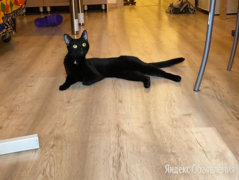 Найтик ищет дом )  по цене даром - Кошки, фото 0
