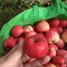 Продукты - Яблоки , 0