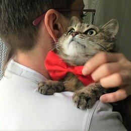Кошки - Маленькая кошечка нуждается в любви, 0