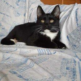 Кошки - Котенок девочка черный, 0