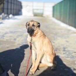 Собаки - Беспородная собака, 0