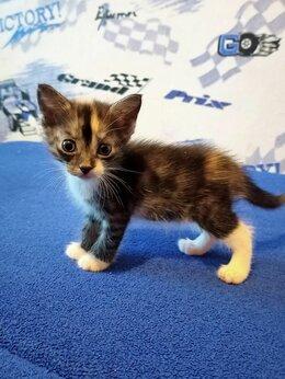 Кошки - Котёнок 1,2, 0