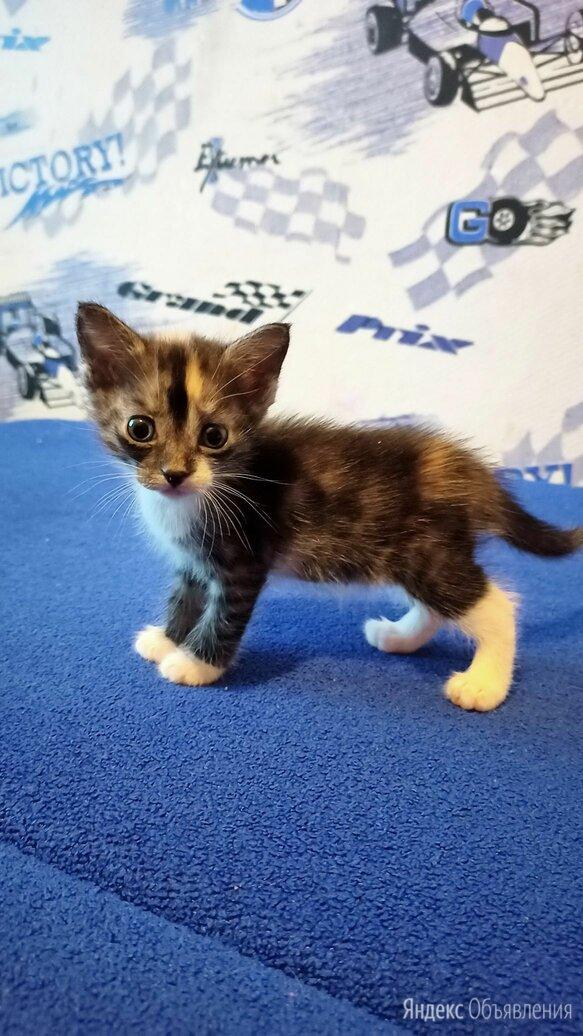 Котёнок 1,2 по цене 50₽ - Кошки, фото 0