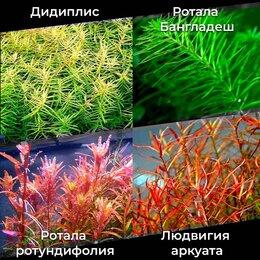 Растения для аквариумов и террариумов - Аквариумные растения., 0