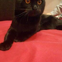 Услуги для животных -  шотландец кот вислоухий черный вязка , 0
