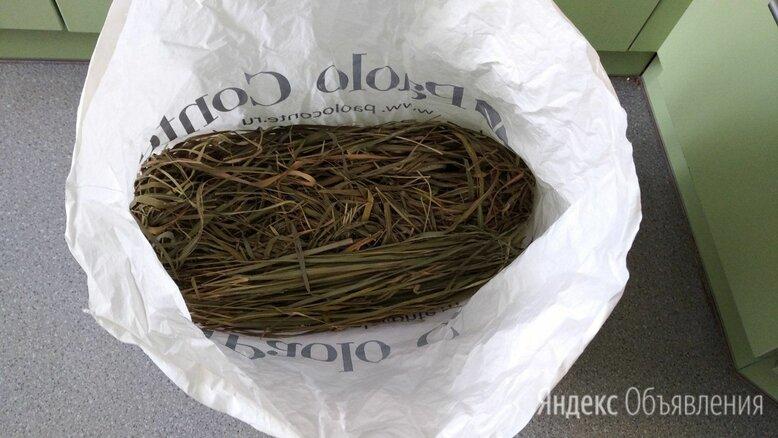 Зубровка трава 20 г по цене 120₽ - Ингредиенты для приготовления напитков, фото 0