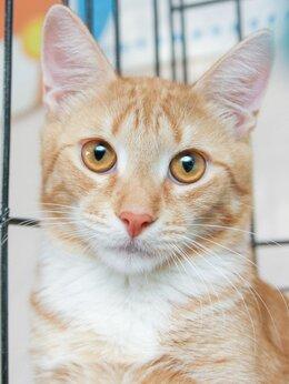 Кошки - Ласковый и очень нежный малыш Сердолик, 0