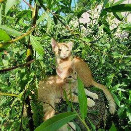 Кошки - Животное, 0