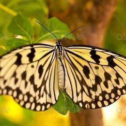 Аквариумные рыбки - Живые тропические бабочки сильвия архиридис, 0