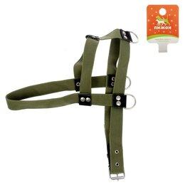 Шлейки  - Шлейка брезентовая 'Ездовая' 1, 3,6 см, обхват шеи 80 см, обхват груди 80-92 см, 0