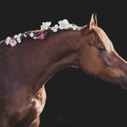 Лошади - аренда лошади , 0