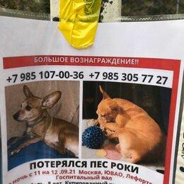 Животные - Потерялся 12.09 в районе Лефортово , Госпитальный вал. Помогите найти. , 0