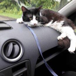 Животные - Кашира2-пропал котик в верхней зоне санэп.Чёрно-белый.Филька,хвост пушистый.   , 0