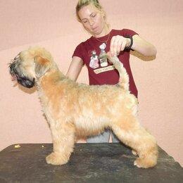 Собаки - Щенки Пшеничного Терьера, 0