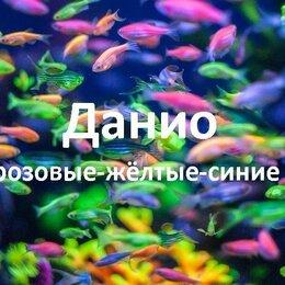 Аквариумные рыбки - Данио.Домашние рыбки., 0