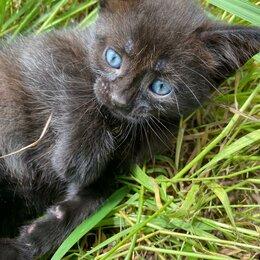 Животные - котята , 0