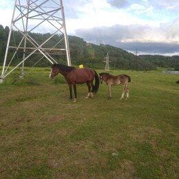 Лошади - Лошади, 0