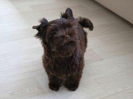 Собаки - Ищем ручки для щенка , 0