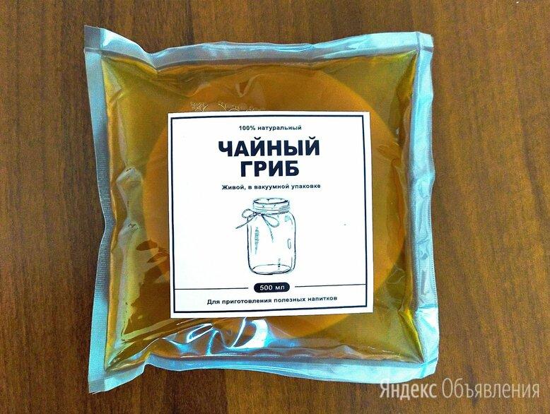 Чайный гриб (комбуча)  по цене 640₽ - Ингредиенты для приготовления напитков, фото 0