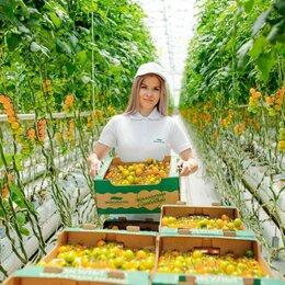 Рабочие - Рабочие на уборку овощей, 0