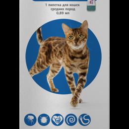 Косметика и гигиенические средства - Бравекто Плюс 250 мг капли для кошек весом от 2,8 до 6,25 кг против клещей и ..., 0