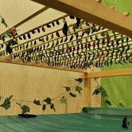 Другие - Домашняя миниферма для живых бабочек FlyStorry, 0