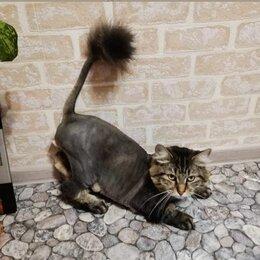 Услуги для животных - Стрижка котов и кошечек на дому у клиента, 0