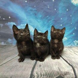 Кошки - Черные котята в дар, 0