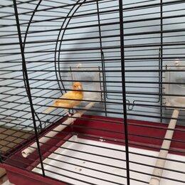 Птицы - Кенар 18месяцев с клеткой, 0