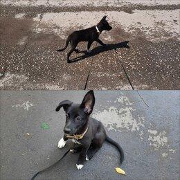 Собаки - Наимилейший щенок в добрые руки, 0