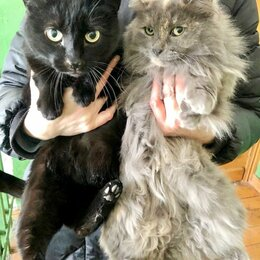 Кошки - Кошки в добрые руки, 0