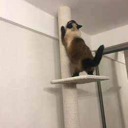 Когтеточки и комплексы  - 😻Красивые и практичные когтеточки для кошек. От пола до потолка!, 0