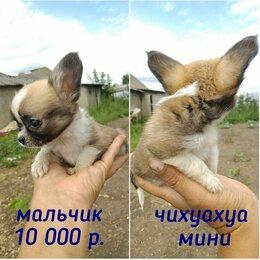 Собаки - Маленькая собачка, 0