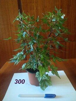 Комнатные растения - Комнатные растения, 0