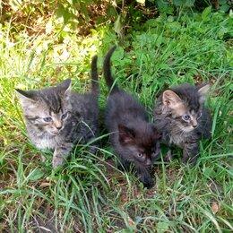 Кошки - Уличные котята, 0