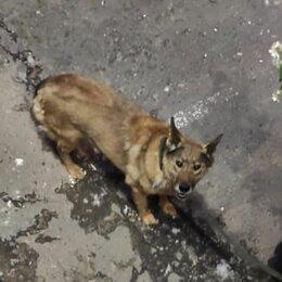 Животные - Пропала собака, 0