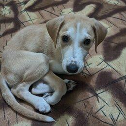 Собаки - Щенок Бруно, 0
