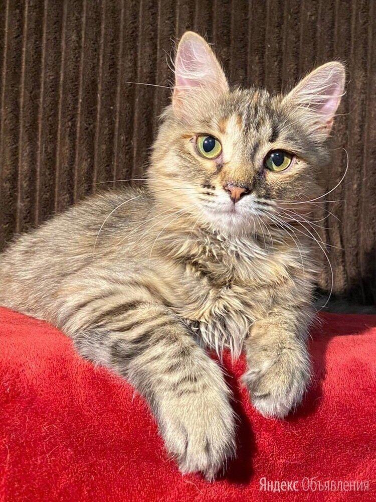 Кошечка Гаечка  по цене даром - Кошки, фото 0