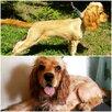 Стрижка, груминг собак по цене 1200₽ - Груминг и уход, фото 8